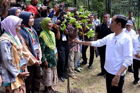 Presiden Jokowi Tanam Pohon di Taman Nasional Gunung Merapi