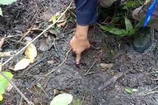 Heboh Harimau di Kampus Unsri, BKSDA Sumsel: Ternyata Jejak Kaki Babi Hutan