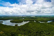 Hutan Hujan Amazon Kena Proyek Pengaspalan, Kerusakan Lingkungan di Depan Mata