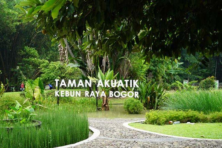 Taman Akuatik di Kebun Raya Bogor.