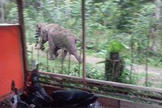 Gajah Bertahan di Permukiman, Anak-anak Diliburkan Sekolah dan Mengaji
