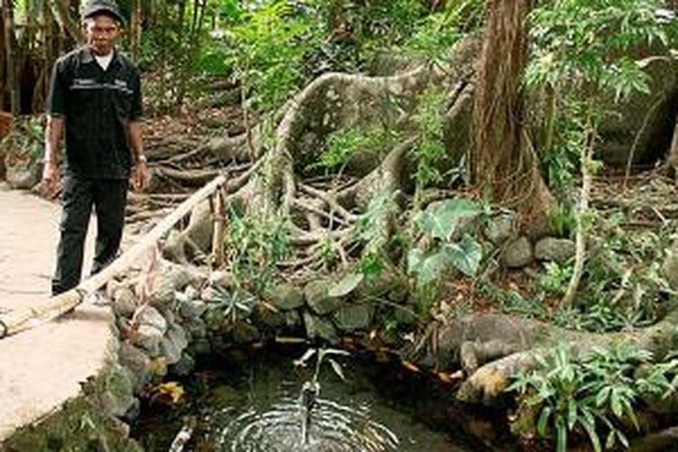 Badra (65), pemandu wisata di Kompleks Wisata Air Sumur Tujuh Cibulan di Desa Manis Kidul, Kecamatan Jalaksana, Kabupaten Kuningan, Jawa Barat, beberapa waktu lalu menunjukkan salah satu mata air yang oleh warga setempat disebut sumur, yang bersumber dari akar pepohonan.