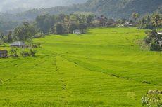 Menjelajahi Lembah Ranggu-Kolang yang Eksotis di Flores Barat (1)