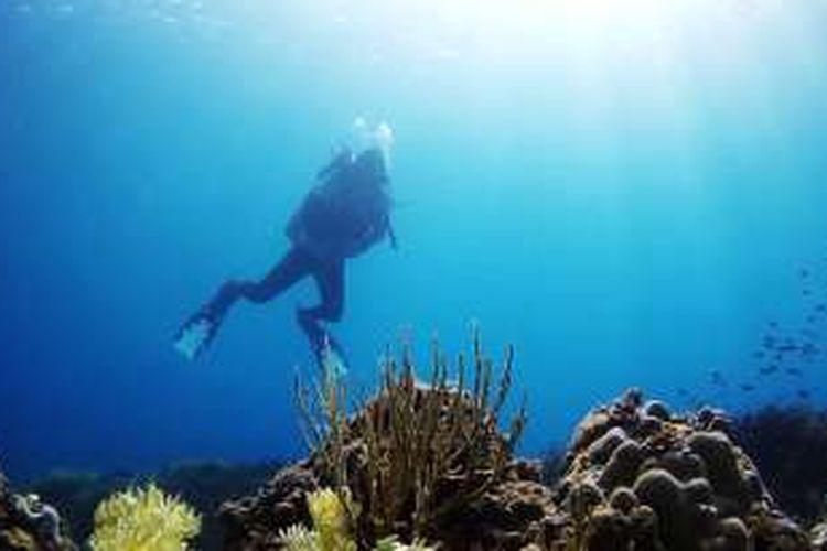 Di kedalaman 4 meter di perairan Pulau Pisang, di Kota Kolaka, Sulawesi Tenggara, penyelam sudah menemukan karang yang indah.
