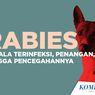 INFOGRAFIK: Mengenal Apa Itu Rabies, Gejala Terinfeksi, hingga Pencegahannya
