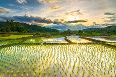 Rawan Gagal Panen, Kementan Imbau Petani Gunakan Asuransi