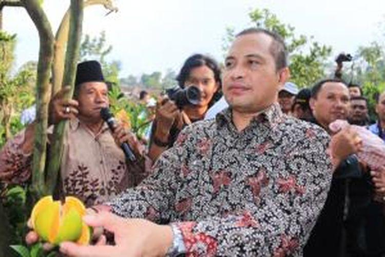 Menteri Desa, Pembangunan Daerah Tertinggal, dan Transmigrasi Marwan Jafar mencicipi jeruk di Desa Selorejo, Malang, Jawa Timur, Jumat (27/3/2015).