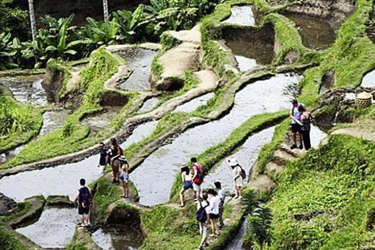 Turis menikmati wisata alam Ceking di kawasan Ubud, Gianyar, yang terkenal dengan pemandangan sawah bertingkat (terasering), Minggu (7/8/2016).