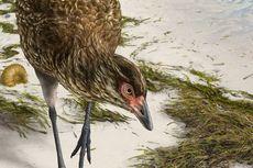 Fosil Nenek Moyang Ayam Ditemukan di Belgia, Dijuluki Wonder Chicken