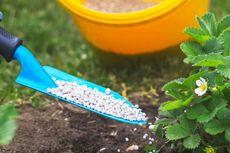 Beri Manfaat Lebih bagi Petani, Dosen Unsoed Kembangkan Pupuk N-ZEO-SR
