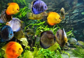 5 Ikan Hias Air Laut yang Cocok Dipelihara di Akuarium