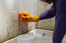 Begini Cara Menghilangkan Jamur pada Dinding Rumah
