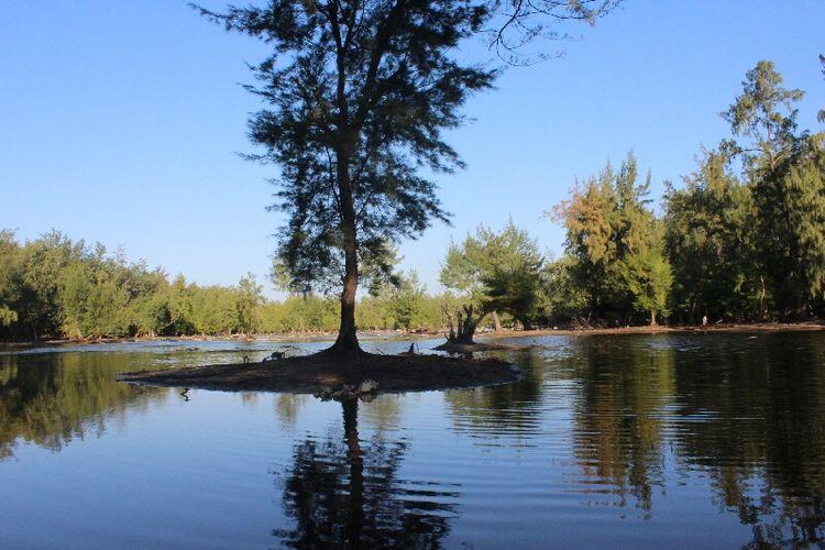 Pesona telaga di tengah kawasan wisata Hutan Cemara Laipori