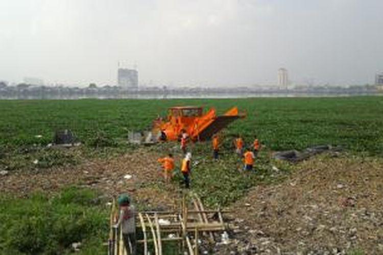 Alat berat digunakan untuk mengangkat tanaman eceng gondok di Waduk Pluit, Penjaringan, Jakarta Utara, Senin (26/5/2014).