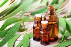 10 Manfaat Minyak Kayu Putih Selain Obati Masuk Angin