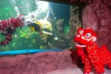 Ada Barongsai Air dan Darat di Seaworld Saat Perayaan Imlek 2020