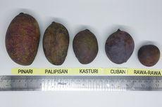 Peneliti Ungkap Asal Keragaman Genetik Mangga Kasturi Khas Kalimantan Selatan