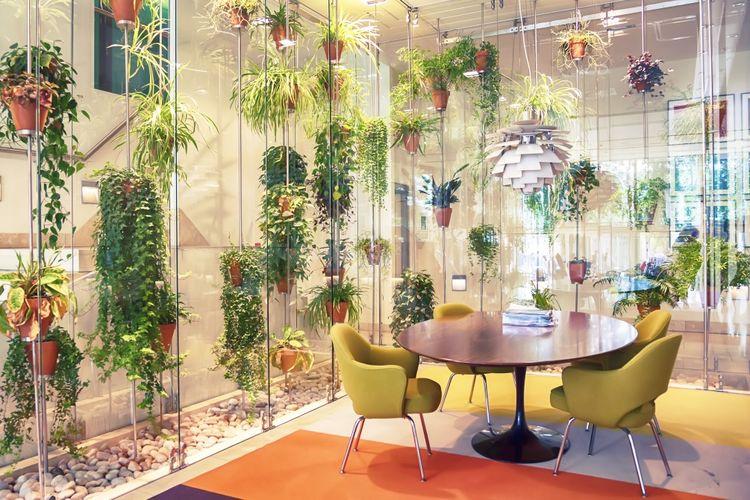 Pot-pot tanaman hijau digantung di sekeliling ruang makan