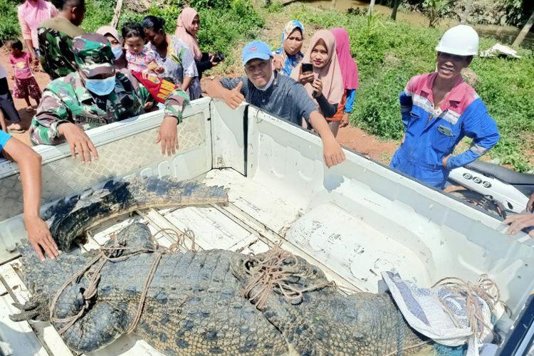 Salah satu buaya muara yang berhasil ditangkap tim gabungan di Sungai Gelam, Kabupaten Muarojambi pada Rabu (15/9/2021).