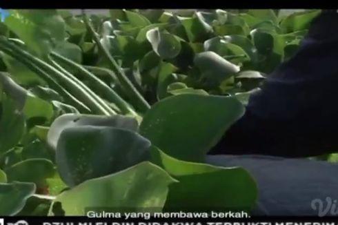 Pesona Dibalik Eceng Gondok, Belajar dari TVRI 15 Mei 2020