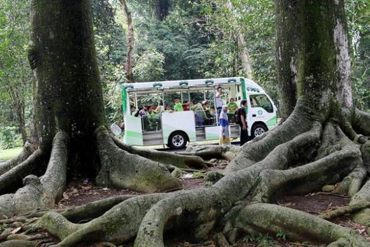 5 Tempat Wisata Sekitar Stasiun Bogor Bisa Dicapai Dengan