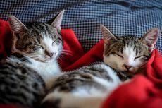 Tips Mencari Kucing Peliharaan yang Tepat untuk Keluarga