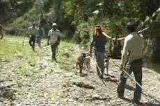 Kemarau Melanda, Babi dan Monyet Serbu Kampung Warga untuk Cari Makan