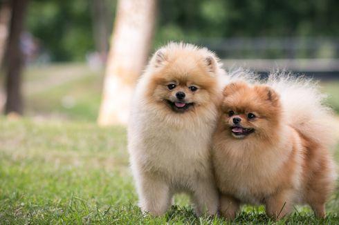 Adopsi Anjing Lebih Baik daripada Membeli, Kenapa?