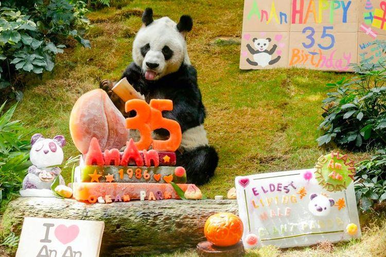 An An, panda tertua di dunia.
