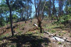 Melacak Jejak Pembalakan Liar Hutan Lindung Sendiki yang Mulai Gundul