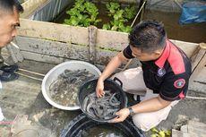 Di Balik Tembok Lapas Dabo Napi Panen Puluhan Kilo Ikan Lele