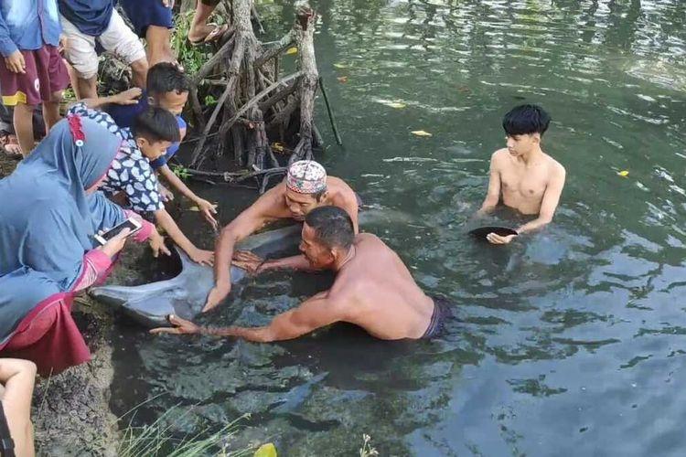Warga berusaha mengevakuasi tiga ekor lumba-lumba yang tersesat di empang warga di Kabupaten Maros, Sulawesi Selatan.
