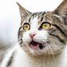 Mengapa Kucing Melingkari Kaki dan Menghalangi Jalan Pemiliknya?