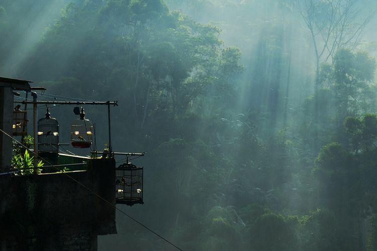 Suasana embun pagi dan cahaya matahari di sekitar pepohonan terlihat di salah satu kampung di Kota Bandung, Kamis (8/7/2021). Salah satu faktor suhu Bandung yang dingin yakni adanya gerak semu matahari ke utara Bumi yang menyebabkan wilayah di selatan mengalami suhu dingin karena kehilangan sumber panas.