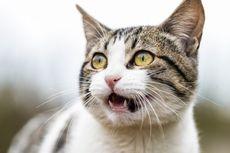 Berbahaya! Jangan Sekali-sekali Gunakan Tetes Mata Manusia untuk Kucing