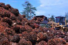 Indonesia Produsen Minyak Sawit Ramah Lingkungan Terbesar di Dunia