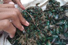 Pertamina Ambil Sampel Koloni Kerang Hijau di Karawang