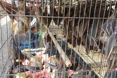 Virus Corona Merebak, Pedagang Kelelawar Pasar Burung Depok Solo Tak Khawatir dan Tetap Berjualan
