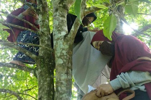 Kuliah Daring, Mahasiswa di Luwu Harus Panjat Pohon dan Naik Gunung