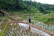 Sarankan Petani Bali Ikut Asuransi Pertanian, Dirjen PSP: Gagal Panen Dapat Rp 6 Juta Per Hektar