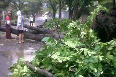 Hujan Besar, Pohon dan Tiang Kabel Telepon Tumbang di Bandung