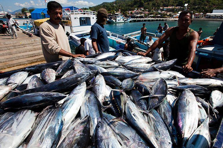 Nelayan menangkap tuna cakalang di Larantuka, Flores, Indonesia. Tuna adalah produk ekspor perikanan terbesar kedua Indonesia.