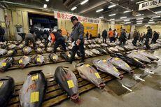 Tikus Jadi Ancaman Relokasi Pasar Ikan Terbesar Dunia di Tokyo