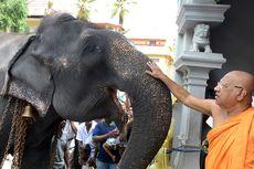 Biksu Senior Tewas Sehari setelah Diserang Gajah Peliharaan Kuil