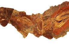 Kerangka Hiu Purba Mirip Belut Ditemukan di Pegunungan Atlas