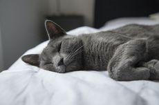 Ragam Alasan Kucing Tiba-tiba Tidur dengan Pemiliknya