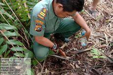 Satwa yang Keluar Hutan karena Karhutla Bukan Harimau, melainkan Tapir