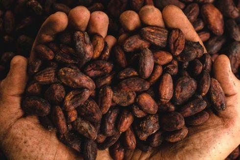 Budaya Cokelat di Indonesia, dari Mana Asalnya?