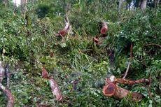 Kronologi Mantri Hutan Babak Belur Dianiaya Pencuri Kayu, Setelah Tak Berdaya Dibuang ke Sawah