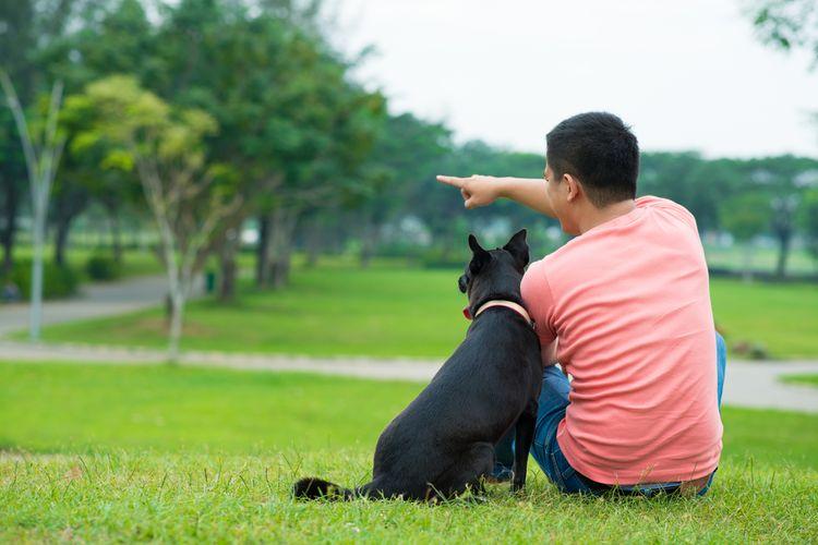 Ilustrasi anjing peliharaan